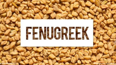 Does Fenugreek Increase Testosterone Levels?
