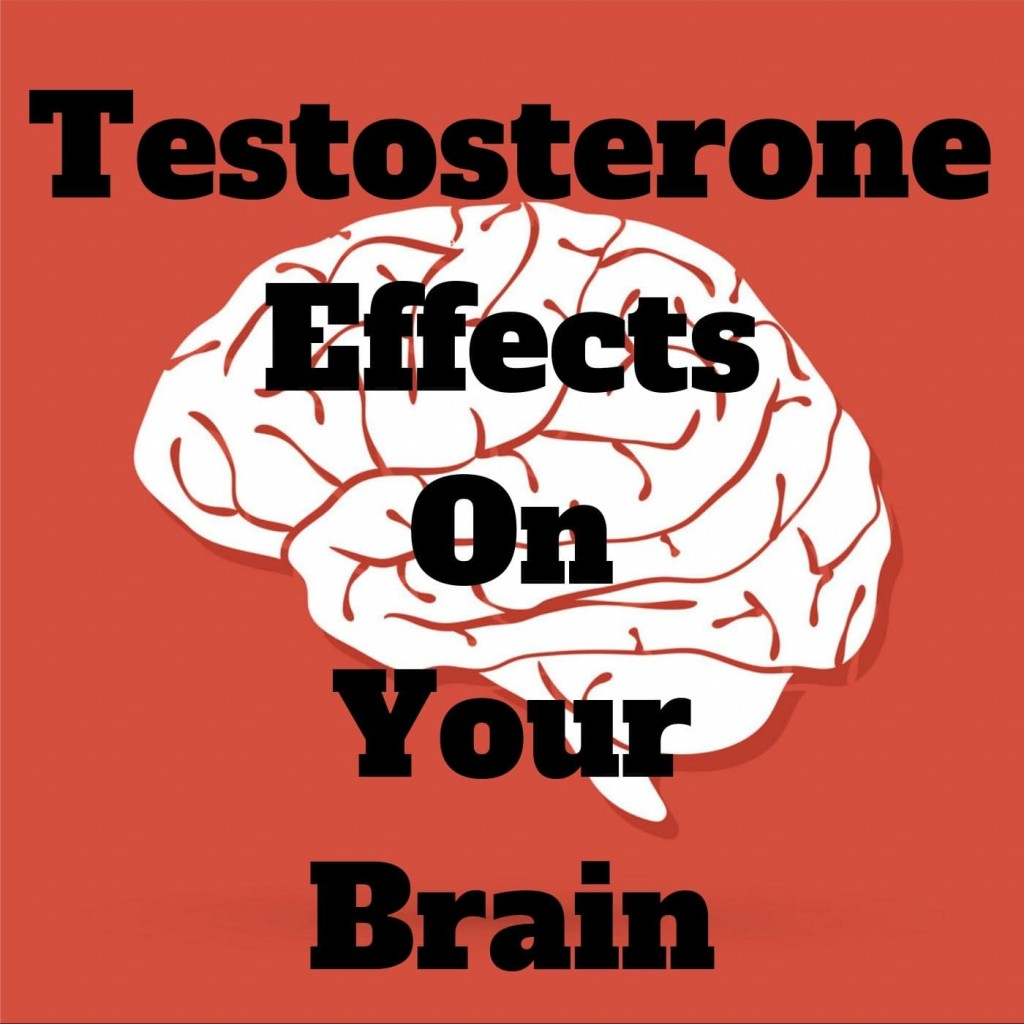 Testosterone effects on the brain